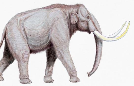 В Пермском крае нашли кости предка мамонта