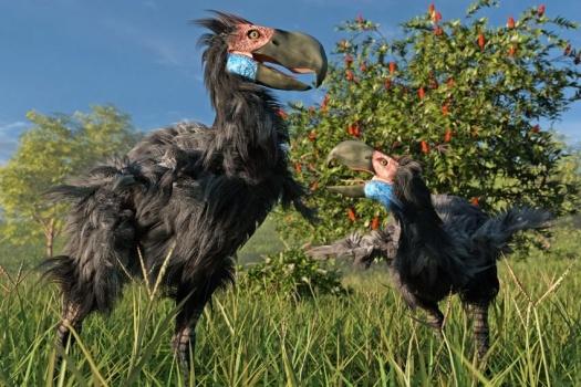 В Арктике 50 миллионов лет назад жили гигантские птицы