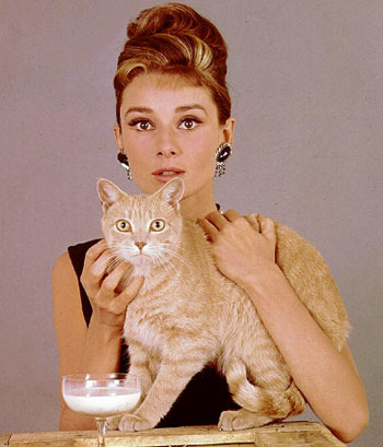 Кот в завтраке у тиффани