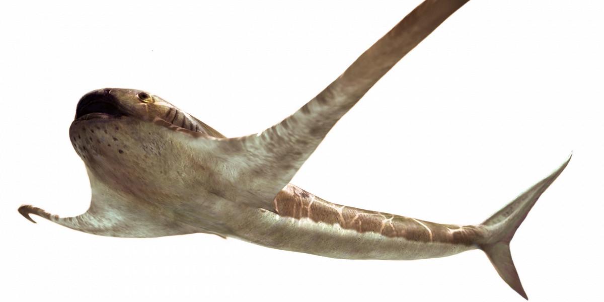 В Мексике нашли окаменелость древней акулы