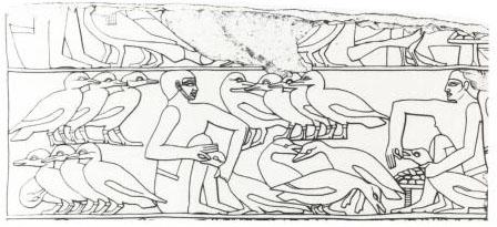 Египетская фреска с изображением принудительного откорма гусей.jpg
