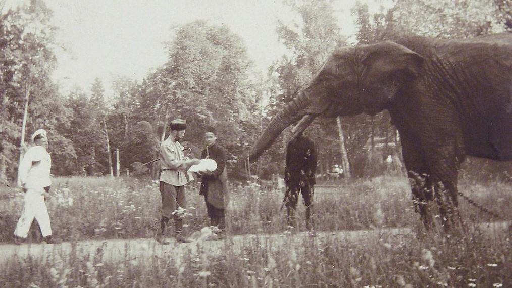 Слон был и уНиколаяII. <br>