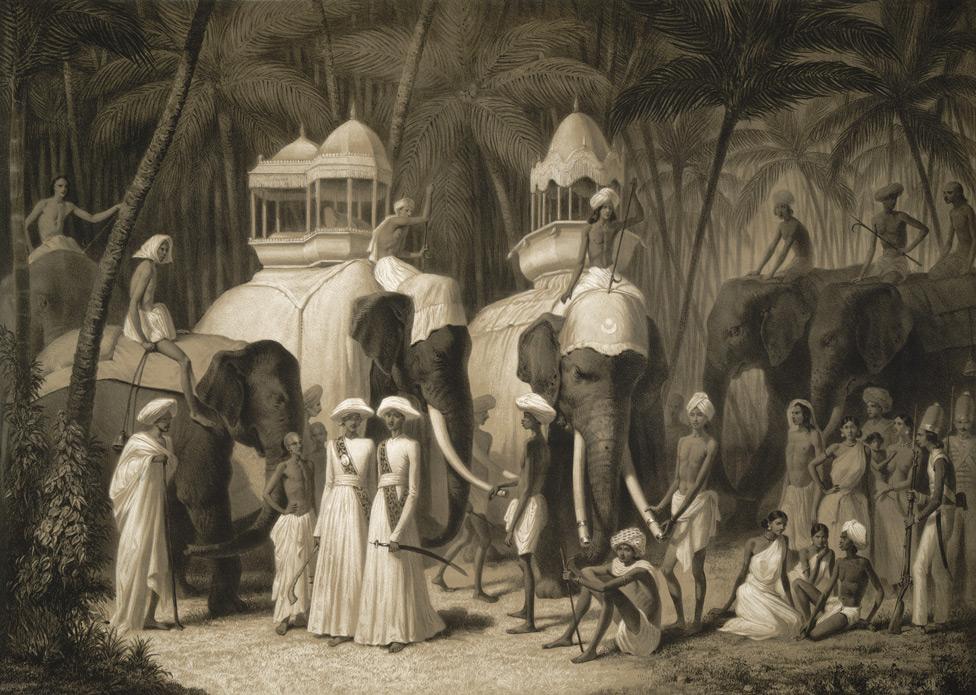Гонки на страусах, слонах и жирафах: живые игрушки человека