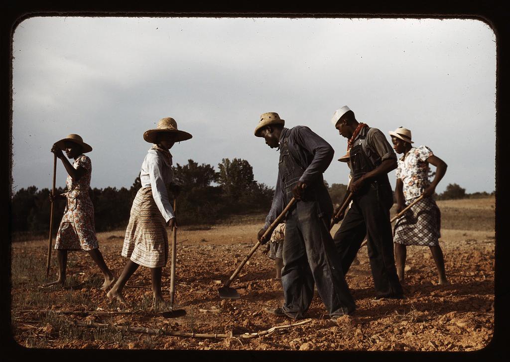 Рабы на хлопковой плантации. <br>